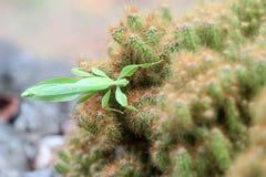 Insecte de feuille sur le cactus photos libres de droits