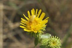 Insecte de fleur Image stock