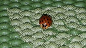 Insecte de Madame sur mon tapis de yoga photos stock