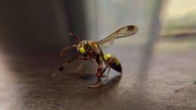Insecte de Ninja photos libres de droits
