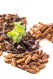 Insecte de nourriture Images stock