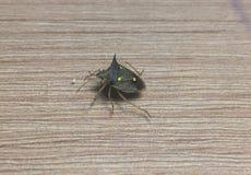 Insecte de nuit Photographie stock