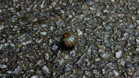 Insecte de pilule foncé image libre de droits