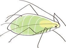 Insecte de pou d'usine Images libres de droits