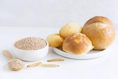 Insecte de poudre de chrysalides de ver à soie pour manger comme nourriture dans la cuvette et la cuillère Poudre insecticide pou photo libre de droits