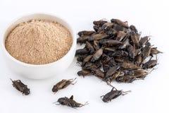 Insecte de poudre de cricket et pile Gryllus Bimaculatus pour manger comme produits alimentaires faits de viande cuite d'insecte  photo stock