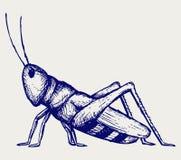 Insecte de sauterelle Gribouillez le type illustration de vecteur