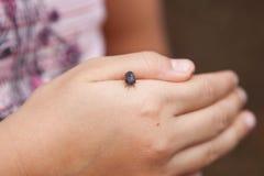 Insecte de tatou sur la main humaine images stock