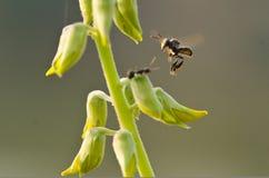 Insecte de vol de plan rapproché Images stock