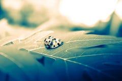 Insecte dramatique de dame de mariage Photographie stock libre de droits