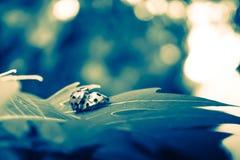 Insecte dramatique de dame de mariage Image stock