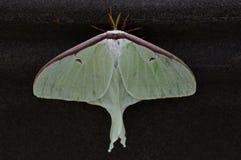 Insecte du bombardier B1 images stock