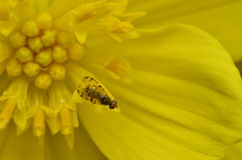 Insecte en Malaisie Image stock
