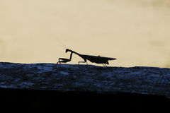 Insecte en parc naturel et Nacional dans Mikumi, Tanzanie horizontaux La belle Afrique Course Afrique Image libre de droits