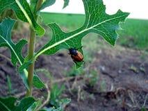 Insecte et feuille Photographie stock libre de droits