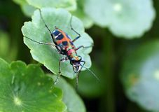 insecte et herbe Photographie stock libre de droits