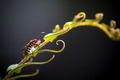 Insecte et nature image stock