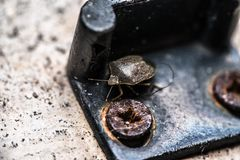 Insecte et vis photos libres de droits