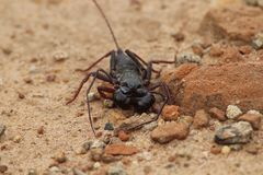 Insecte inconnu photo stock