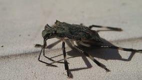 Insecte lent