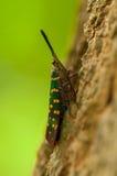 Insecte mignon dans le sauvage Image libre de droits