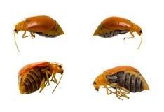 Insecte mort Image libre de droits
