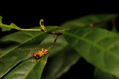Insecte sur la feuille   Photos libres de droits