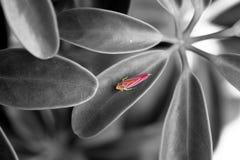 insecte rose Photographie stock libre de droits