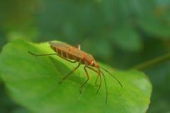 Insecte rouge photographie stock libre de droits