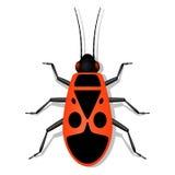 Insecte rouge de soldat avec des anthracnoses Images libres de droits
