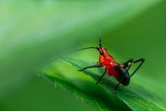 Insecte, sauterelle photographie stock libre de droits