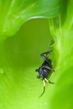 Insecte se cachant parmi des lames Photographie stock libre de droits