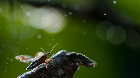 Insecte sous la pluie, macro tir photographie stock
