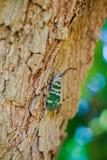 Insecte sur l'arbre images libres de droits