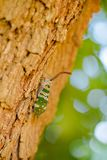 Insecte sur l'arbre photos stock