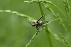 insecte sur l'herbe Photographie stock