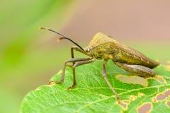 Insecte sur la feuille Images stock