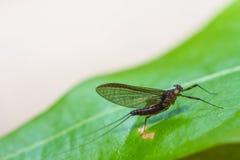 Insecte sur la feuille dans la forêt photographie stock libre de droits