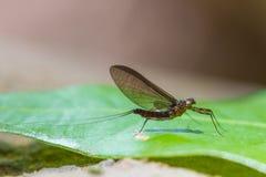 Insecte sur la feuille dans la forêt images libres de droits