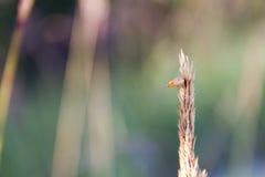 Insecte sur la fleur sauvage dans le pré Images stock