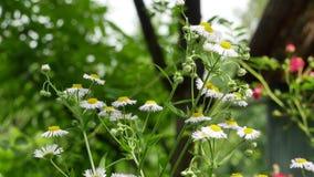 Insecte sur la fleur sauvage 4k banque de vidéos