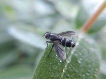 Insecte sur la lame photos libres de droits