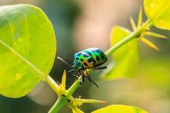 Insecte sur la lame photos stock