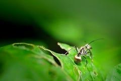 Insecte sur la lame verte Photos libres de droits