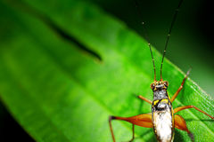 Insecte sur la lame verte Image libre de droits