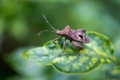 Insecte sur la lame verte Image stock