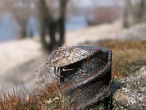 insecte sur la tige de fer photographie stock libre de droits