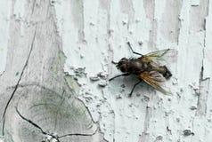 Insecte sur le bois Image libre de droits