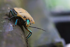 Insecte sur le branchement Photos stock