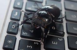 Insecte sur le clavier d'ordinateur portable Photographie stock